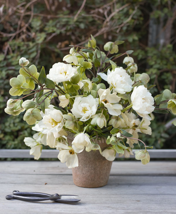 The Floral Pantry hellebore and tulip bundle