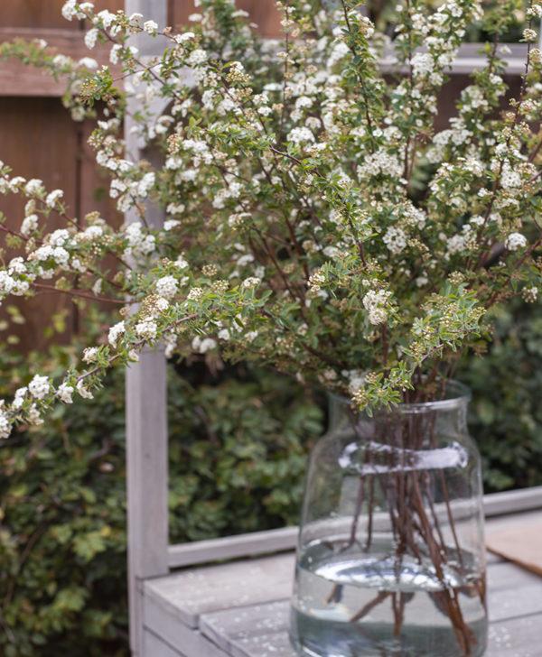 flowering spirea branches 3